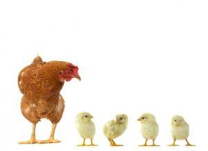 Caractristiques et fonctionnalit des ventilateurs pour llevage avicole