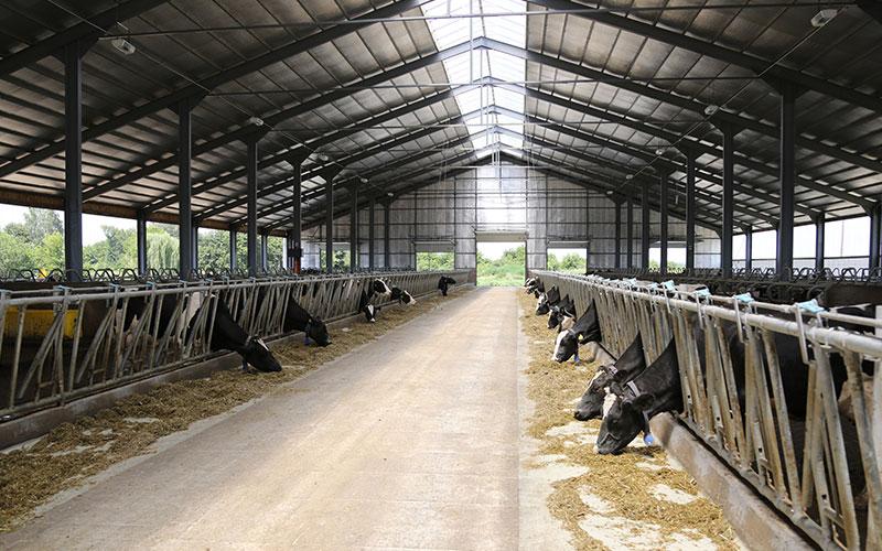 Le meilleur climat pour les vaches laitires